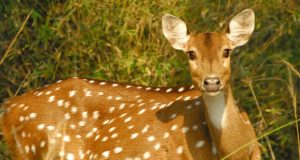 Yercaud Deer Park