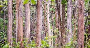 Teak Forest in Yercaud